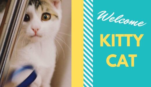 まずはこれを揃えよう!子猫を家族に迎える時の必需品リスト